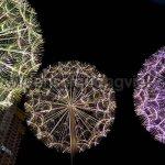Den soi quang trang tri ngoai troi hoa bo cong anh 12 150x150 - ĐÈN SỢI QUANG HOA BỒ CÔNG ANH