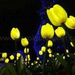 Den hoa tulip 9 150x150 - ĐÈN CÂY HOA TULIP